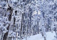 15冬木立2020