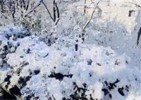55冬景色2020