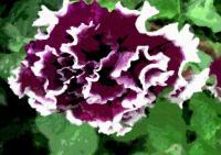 170庭の花