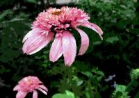 172庭の花