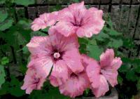 174庭の花