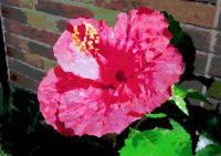 176庭の花