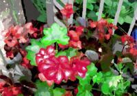 178庭の花
