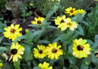 180庭の花